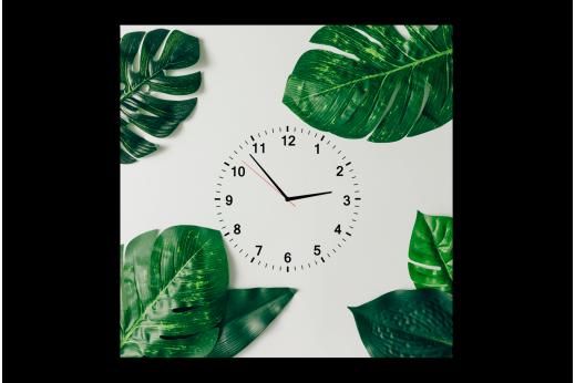 Картина-часы Папоротник